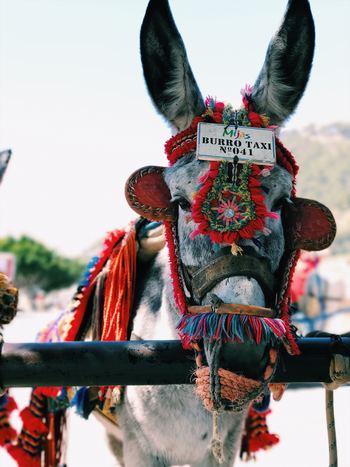 メキシコの南東にあるオアハカ州は、刺しゅうや織物、冬期や木工芸品など、たくさんの手仕事にあふれた街。