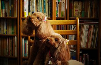 人の良き友になれる犬は、いつの時代も人気者。仕草の一つ一つが可愛らしく、悪気はなくとも飼い主さんを困らせることがあるかと思えば、悲しい時にはさりげなく寄り添ってくれたりと、その存在はかけがえのないものです。そんな犬たちが活躍する絵本を読んで、犬への愛をもっと深めてみませんか?