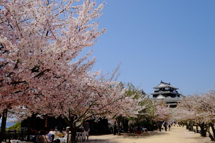 春は桜、秋は紅葉など四季折々で美しい風景を見せてくれる松山城は、松山市を一望できる眺望スポットとして人気があり、いつも大勢の人々で賑わっています。城跡を整備した公園内には、約200本の桜が植栽されており、毎年3月下旬から4月上旬頃にかけて見頃を迎えます。