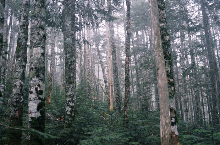 森の中を歩いている際に見つけた小さな植物や岩など、自然の造形美にフォーカスした『IN THE FOREST』のアクセサリー。 植物をモチーフにした一つ一つの作品には、デザイナー・宮田有理さんが登山をする中で感じてきた山の魅力が反映されています。