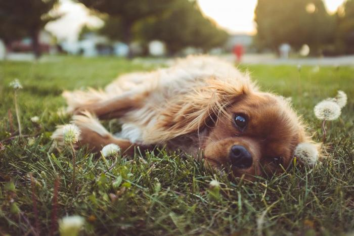 あくせくした忙しい毎日の中で心が疲れてしまった時も、無条件に寄り添ってくれる犬たちは、特別な存在。犬を飼っている人は、無邪気な犬たちにホッとさせられることも多いのでは。犬を飼っていない人も、犬の愛らしさや人との絆が伝わる絵本を手にとって、リラックスした絵本時間をお楽しみくださいね。