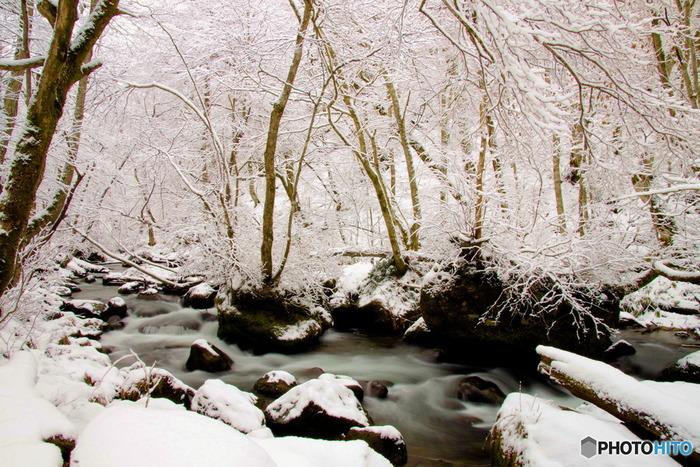 青森県内指折りの観光名所・奥入瀬渓流は冬だって見頃。雪をまとった木々たちは凛として、見事な美しさを見せてくれます。