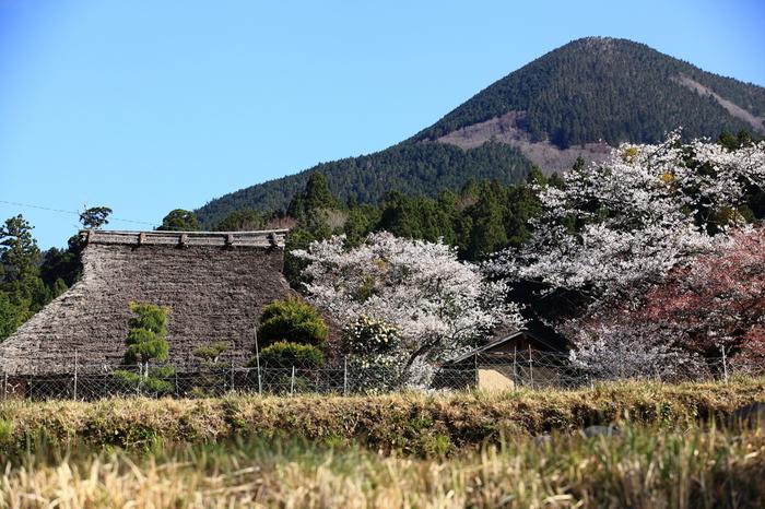 国の名勝に指定されている三多気の桜は、三重県を代表する桜の名所です。茅葺屋根の民家が残る日本の原風景が広がる三多気では、まるで日本昔話の中に入り込んだような錯覚を感じます。