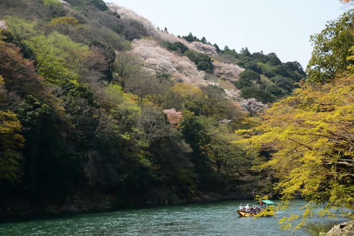 毎年3月下旬から4月上旬にかけて嵐山、小倉山麓の桜が見事に開花し、平安時代から貴族達の別荘地として栄えた風光明美な景色を引き立てています。