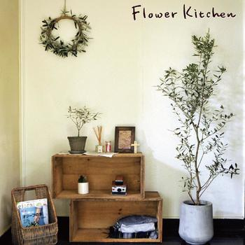 オシャレなカフェやサロンのエクステリアや窓辺、室内などでオリーブの木ってよく見かけませんか?葉っぱの様子や樹形が美しく、絵になりますね。可愛い花を咲かせたり、実をならせたり、楽しみも多いのも魅力です。そんなオリーブの木を、ぜひおうちに迎えてみませんか?