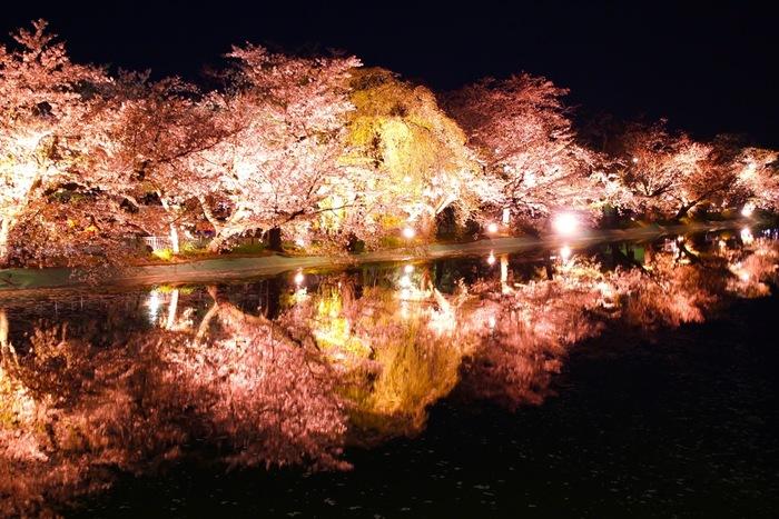 臥竜公園には、約800本の桜が植栽されており、桜の開花時期に合わせて臥竜公園さくらまつりが開催されます。波一つ無い静かな臥竜池の水面が、光を浴びて輝く桜を鏡のように映し出し、臥竜池周辺は、幻想的な雰囲気に包まれます。