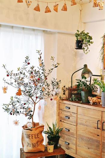 オリーブの木は、お部屋のシンボルツリーとして配置してもオシャレです。そして、実際にクリスマスツリーとして飾りをつけてみるのもいい思い出になりそう。