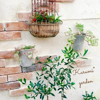 オリーブの木と、アイビーやチェッカーベリーなどの植物を組み合わせるのもいいですね。シンプルなオリーブは、どんな植物も合わせやすいのがメリット。ちなみに、写真のアイビーなどの鉢は、割れたものを壁に貼っているのだとか。なんてオシャレなアイデア!