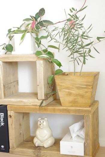 オリーブの木は、小さいものならば棚のちょっとしたスペースに飾ることもできます。ウッディなおうちならば、写真のように木の鉢カバーをして、インテリアとのコーディネートをするのもいいですね。オリーブは、ナチュラルライフにもぴったりです♪