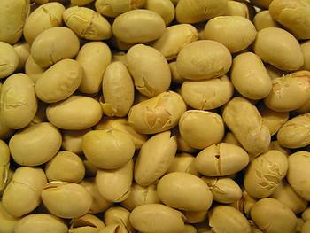 現代人に不足している植物性たんぱく質を補ってくれる食材です。とくに大豆は、良質のタンパク質やミネラルが豊富で、ヘルシーな食生活の強い味方になってくれます。