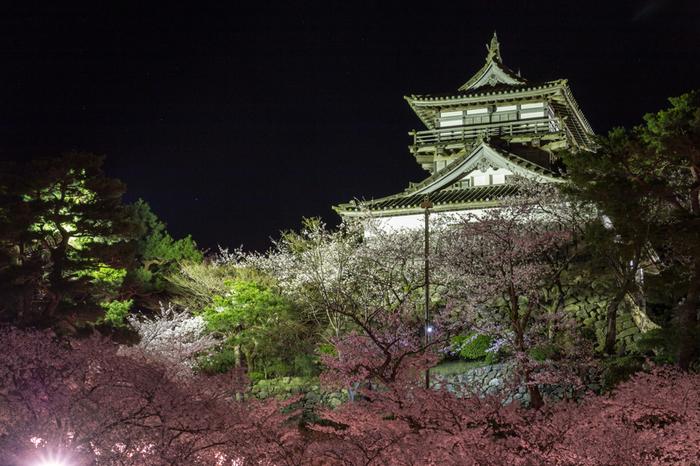 丸岡城では、桜の開花時期に合わせて「丸岡城桜まつり」が開催されます。夜になるとライトアップが開催され、丸岡城は日中とは異なる表情を見せてくれます。