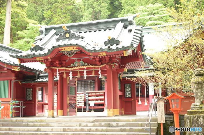 芦ノ湖までやってきたら訪れたいのが「箱根神社」。関東屈指のパワースポットとして知られており、縁結びで有名な「九頭竜神社」とあわせて、ぜひお参りしてみてくださいね。