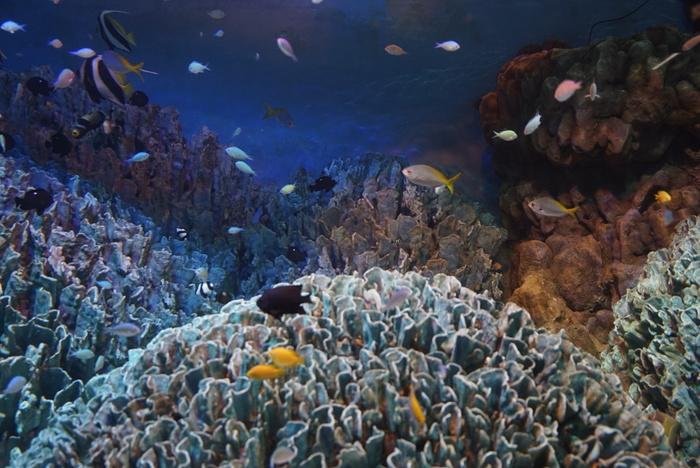南国の浅瀬をイメージした大型水槽「サンシャインラグーン」では、南の海でしか見ることができないカラフルな熱帯魚が迎えてくれます。去年11月、事故によって魚が減少してしまった水槽も、1月現在徐々に復活しつつあります。