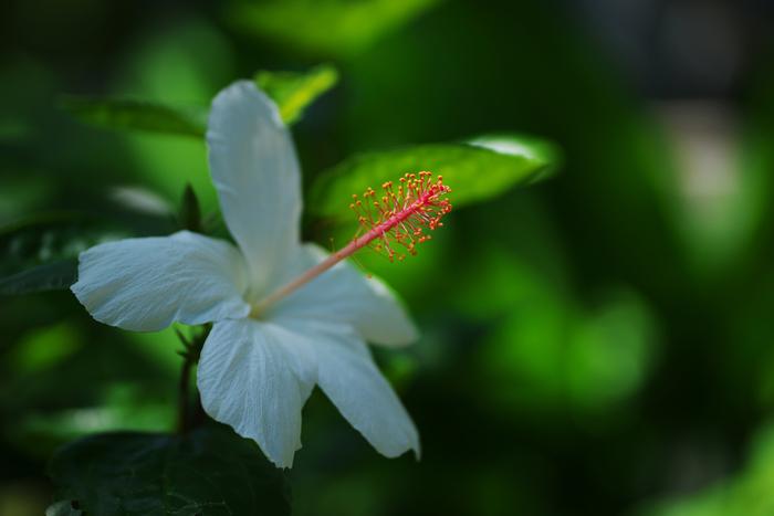 色とりどりのハイビスカスやパイナップルやカカオの実など、見たことのない植物がいっぱい。まるで南国のような雰囲気でインスタ映えも◎ 館内ではiPodをレンタルしていて、貴重な熱帯植物について写真・音声・写真でより詳しく学ぶことができます。(レンタルには、身分証の提示が必要です)