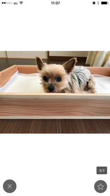 小型犬のしつけ用トイレやベッドなどにも使える木製トレー。浅型りんご箱を使っていますが、もちろんワイン木箱でもOK。木製ですから、インテリアにもなじみやすいのが特徴です。