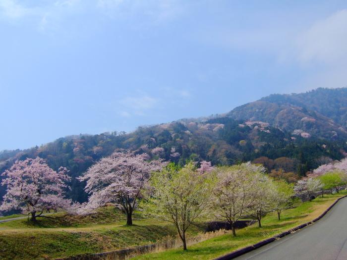 「日本さくら名所100選」のほか、「飛騨・美濃さくら33選」にも選定されている霞間ヶ渓の桜は、土砂災害が多かった鎌ヶ谷に土砂崩れを防ぐために植栽された桜が発端となります。