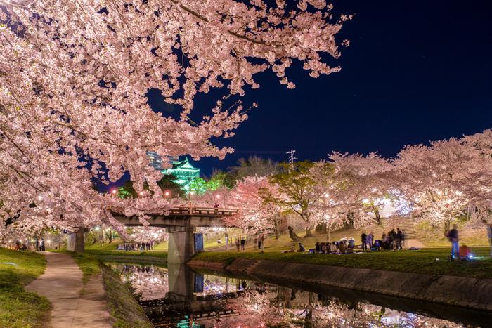 岡崎川畔の桜並木は見事で、「日本の都市公園100選」にも指定されている岡崎公園の美しさを引き立てています。