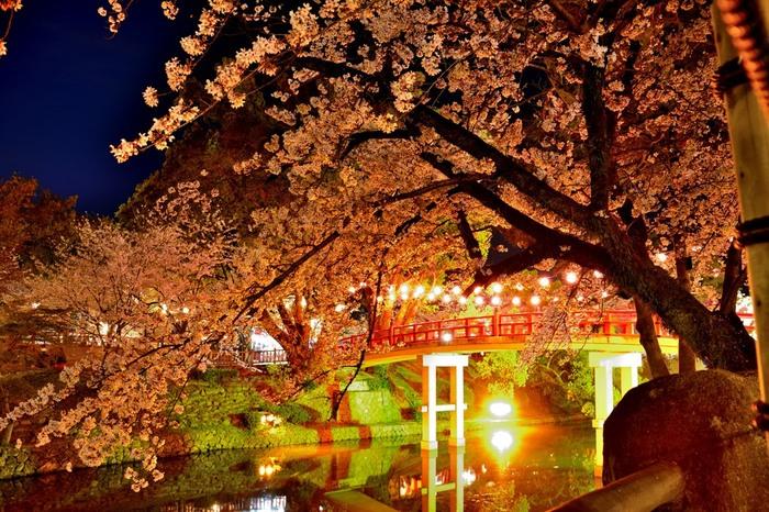 毎年、桜の開花時期に合わせて「岡崎の桜まつり」が開催され大勢の花見客で賑わいます。藍色の夜空、無数のぼんぼり、光を浴びて輝く桜が見事に調和し、公園内は幻想的な雰囲気に包まれます。