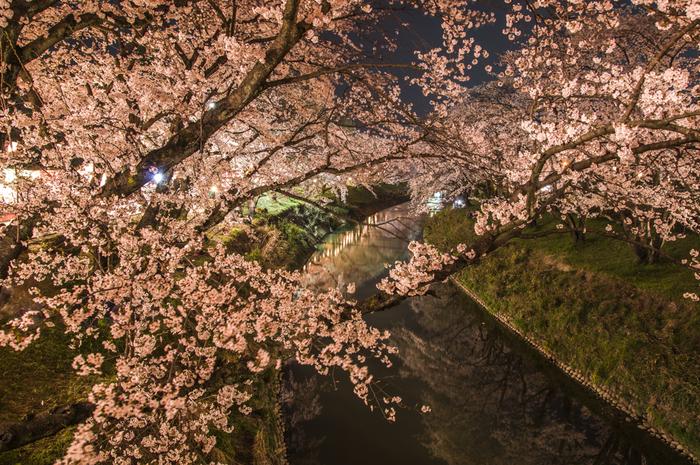 岐阜県各務原市をとうとうと流れる新境川の両岸には約1200本にも及ぶ桜並木があり、この地にソメイヨシノを寄贈した歌舞伎役者、市川百十郎にちなんで「百十郎桜」と呼ばれています。