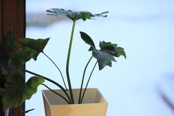 寒さが苦手な観葉植物たちを、春に向けて丁寧に休ませてあげるのが、冬のお手入れ。温度・水やり・乾燥・日光、この4つがポイントになります。一口に観葉植物と呼んでも、その性質は種類によってそれぞれ違います。やがてくる春を健やかに迎えられるよう快適な環境を保ってあげたいですね。