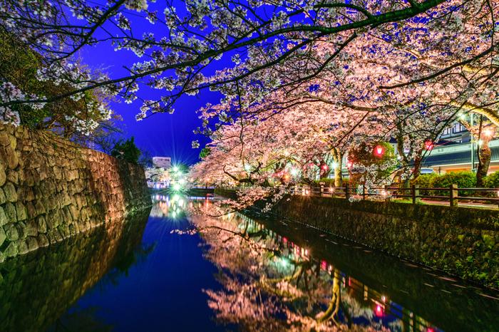 お濠周辺での夜桜の美しさは傑出しています。波一つ無い濠の水面が、ライトを浴びて輝く桜を鏡のように映し出し、辺りは幻想的な雰囲気に包まれます。