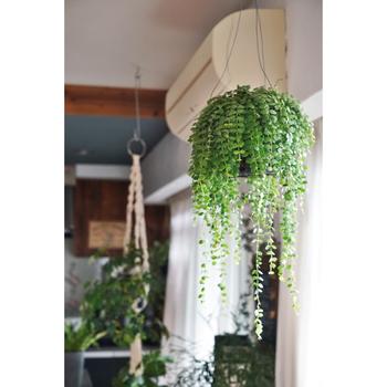 観葉植物には調湿効果があり、空気が乾燥しているときには蒸散をして湿度を上げてくれるそうです。