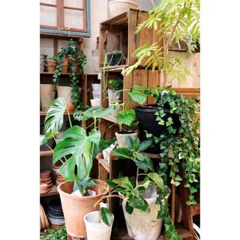 タバコやペットの臭いを抑える消臭作用もありますし、何より植物を見ていると心が落ち着き、癒やされるのでインテリアにプラスしてみてもいいですね。