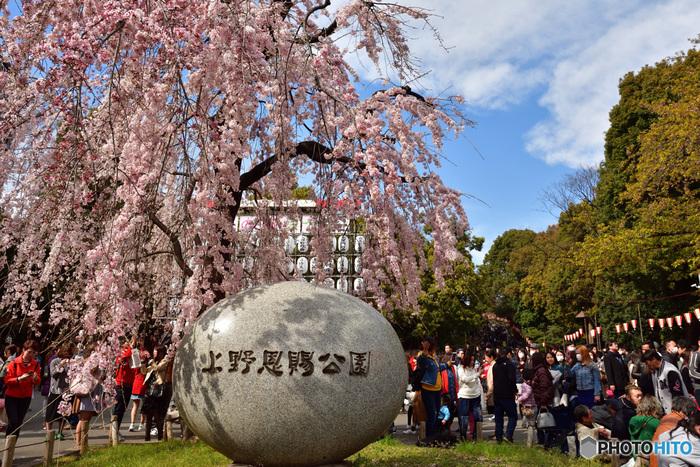 美術館、博物館、動物園など様々なアミューズメント施設がある上野恩賜公園は、敷地面積約53万平方メートルの公園です。江戸時代から、桜の名所として知られており、毎年大勢の花見客で賑わいます。