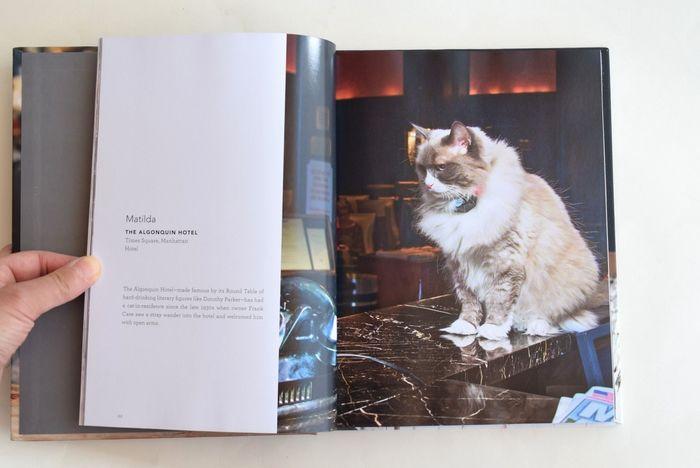 マンハッタンにあるアルゴンキンホテルには、1930年代に迷い込んだ野良猫を受け入れて以来、ずっと看板猫がいるんだそう。