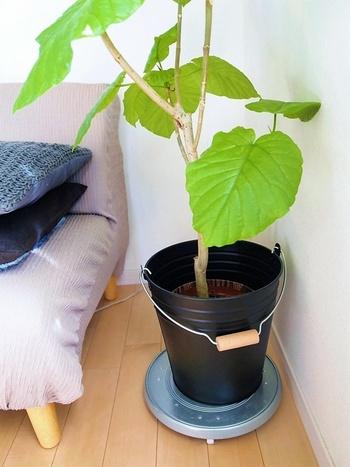 「種類により寒さには弱いけれど水は多めに欲しい」、「寒さは平気だけれど日光が多く欲しい」など、適した環境は様々。下記にまとめたのは多くの観葉植物に共通するざっくりとした傾向なので、ご自宅の植物の種類別に「耐寒温度」「耐陰性」「耐乾燥性」を調べて適した環境を用意してあげてくださいね。