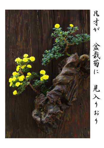 俳人・松尾芭蕉などに代表される俳句は、五七五でなる和歌です。短歌や俳句には高額な楽器も衣装も必要ありません。  一度習えば、いつでもペンと紙で創作ができますし、知識や教養も身に着けることができる奥の深い和の習い事です。