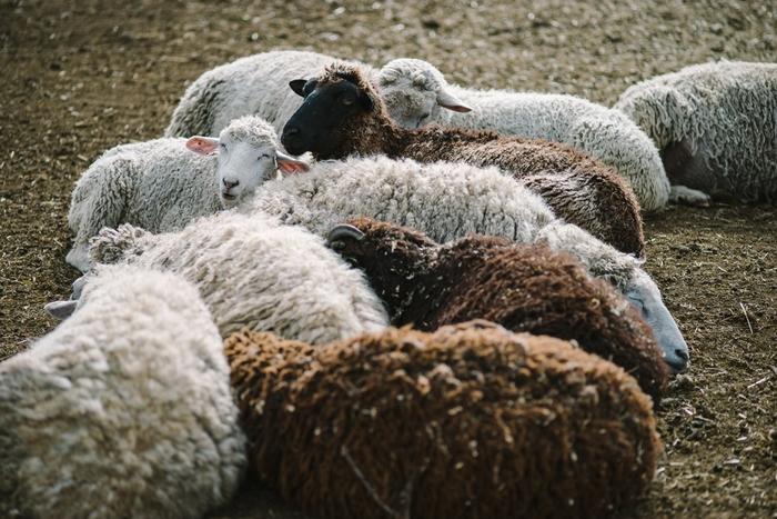 皆さんご存知かとは思いますが、ムートンは羊の皮。フランス語でムートン、英語でシープスキンと呼ばれますが『ムートン』はもうすっかり日本に定着しているカタカナ語ですね。ムートンは保温性はもちろん、通気性にも優れているので、ブーツの素材として、足元が暖かく蒸れにくいという嬉しい機能性も持ち合わせています。