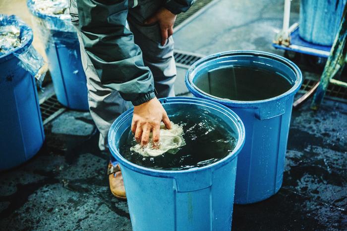 まずは布を満遍なく水につけていきます。「普通の染料だと、前処理がすごく大変なんですよ。でも藍染めは、水に濡らして、染料につけるだけ」と浩彦さん