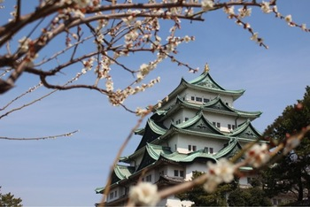 「日本100名城」「国の特別史跡」に指定されている名古屋城は1609年に徳川家康によって築城された城です。場内には、約100本の梅が植栽されており、天守閣の美しさを引き立てています。