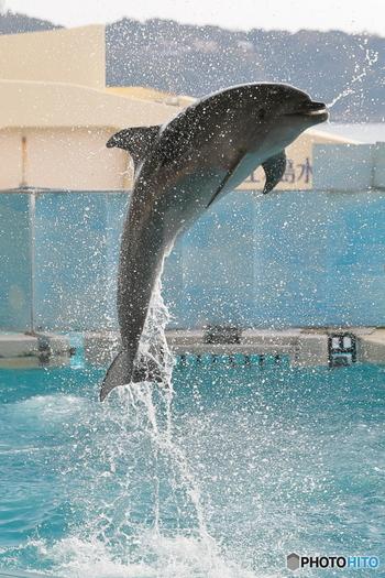 バッシャーン!せっかくならイルカショーを間近で見て、イルカと一緒にびしょ濡れになるのも良い思い出になるかも!? 「新江ノ島水族館」
