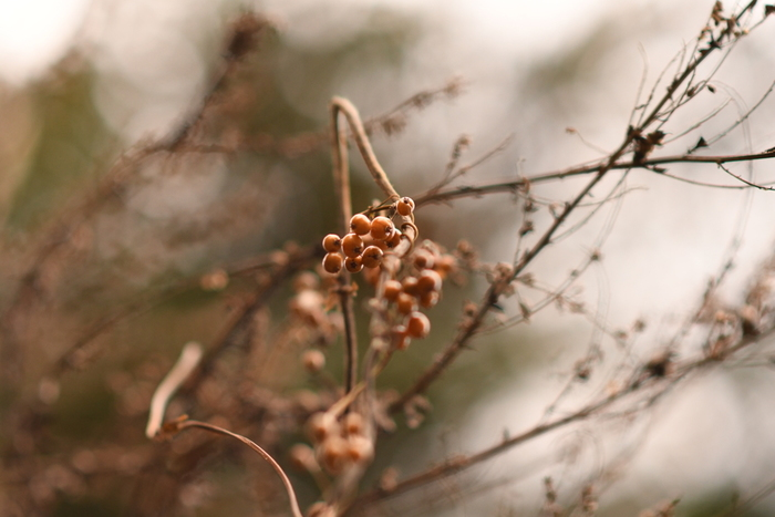 冬といえば気になるのが乾燥です。 唇やお肌がカサカサしたり、喉が痛くなってしまったり、ちょっとため息が出ちゃいますよね。