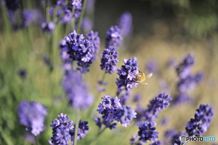 青空のもと、お出かけするのも気分転換にぴったりですね。いつもの公園に出かければ、初夏の花が咲き、蝶や蜂が舞って夏の訪れを感じられるはず。