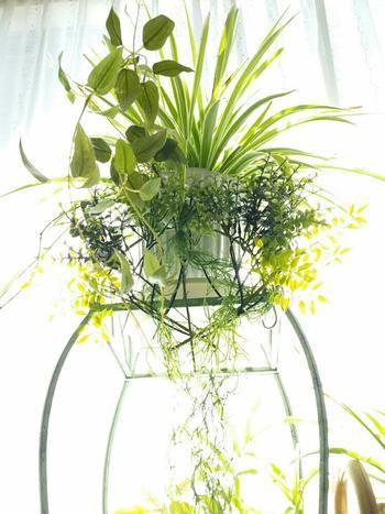 """こちらは""""寄せ植え""""のアレンジ。「オリヅルラン」は他の植物との相性もいいので""""寄せ植え""""にも最適!"""