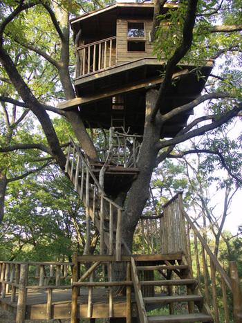 なんと、木の上に作られたタイニーハウス。昔絵本で見たことがあるような世界観が広がっています。物語の主人公になれそうですね。