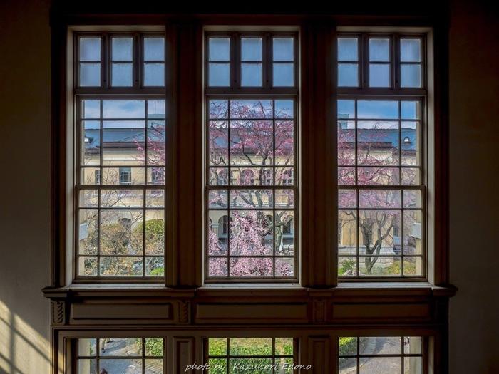 春には中庭の大きな枝垂れ桜が咲きます。窓越しに見る桜は、まるで額縁に飾られた絵画のよう。見学も自由にできるので、人気のお花見スポットでもあります。