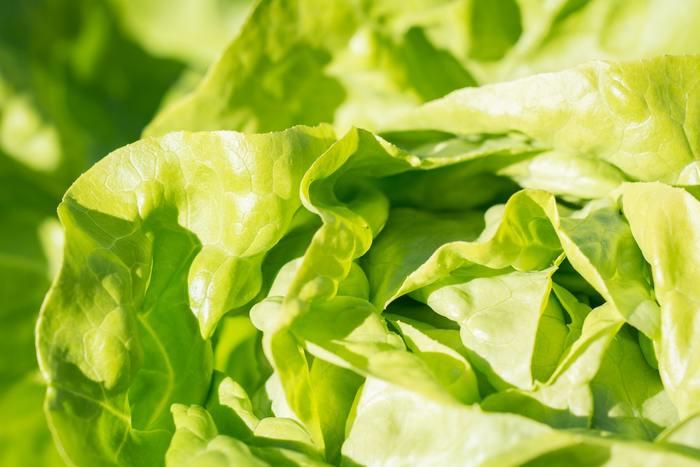 キャベツ、レタス、ほうれん草…天候不良などによって値段が高騰する葉物野菜。普段より数倍するお野菜を購入するとなると、毎日のお料理作りにも影響してしまいます。そこで、今回は、そんな時にも役立つ節約サラダのレシピをご紹介したいと思います。サラダは、栄養面は勿論、食卓に彩を添えてくれる欠かせない存在。是非、参考にしてみて下さいね!