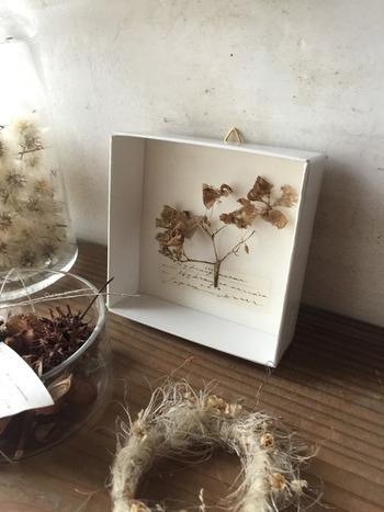 お部屋にちょっと飾るなら、小さめサイズの紙箱標本も素敵ですね。ありのままの自然をほんの少し生活空間にお招きしたような、シンプルなのに存在感のあるインテリアです。