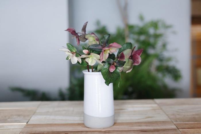 様々な活け方が楽しめるクリスマスローズ。まずは、ラフにざっくりと活けてみて。花瓶の高さと花瓶から出る花の長さは1:1が基本ですが、クリスマスローズは顔の美しさが際立つ2:1もおすすめ。花瓶の上にこんもりと花を盛り付けるイメージで。