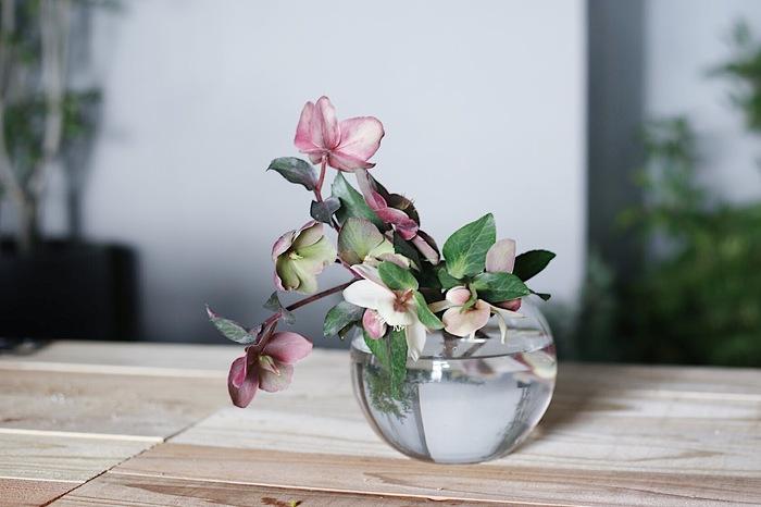 お部屋の雰囲気に合わせながら器を変えて、いろんな飾り方を楽しめるのもクリスマスローズの魅力。水滴を思わせる丸くて透明な花瓶に活けると、なんだか心が静まるよう。アシンメトリーを意識して活けるのも素敵。