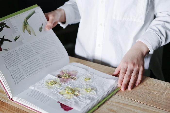 【連載】『霽れと褻』代表・田中さんに教わる 「花ごよみ」vol.7-クリスマスローズ