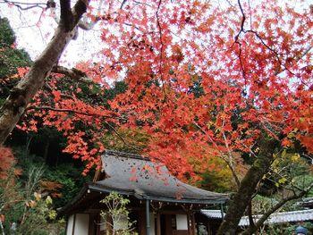 三千院は四季折々で美しい景色を見せてくれます。春は桜と新緑、梅雨時はアジサイ、秋は紅葉、冬は雪化粧と、どの時期に三千院を訪れても見ごたえがあります。