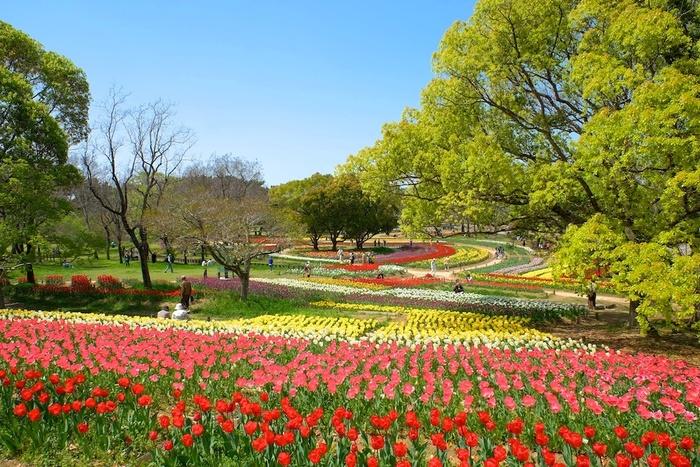 大阪府吹田市にある万博記念公園では、毎年春の恒例イベントとして「万博記念公園チューリップフェスタ」が開催されます。