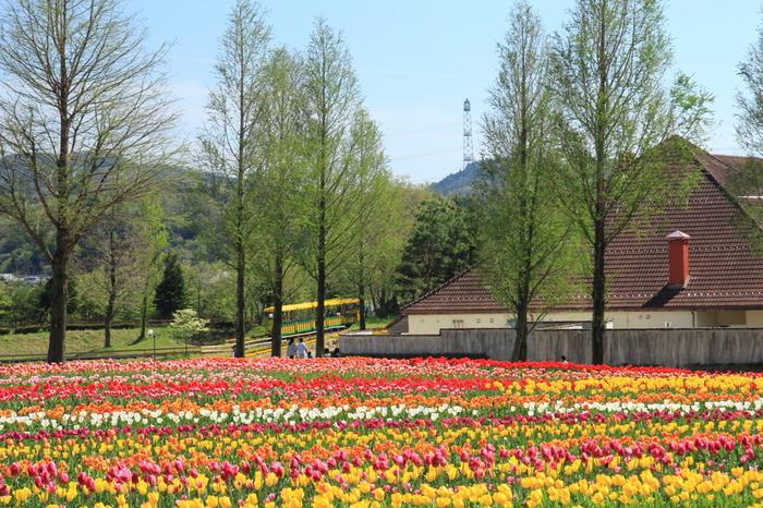 ヨーロッパの農村を想わせる建物と競うように咲き誇るチューリップがが、豊かな自然に囲まれたブルーメの丘の田園風景の美しさを引き立てています。