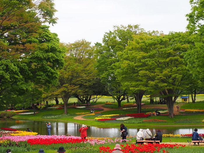 1983年に開園された国営昭和記念公園は、敷地面積165.3ヘクタールの国営公園です。お花見以外にも庭園、バードウォッチング、スポーツなどを楽しむことができることができます。