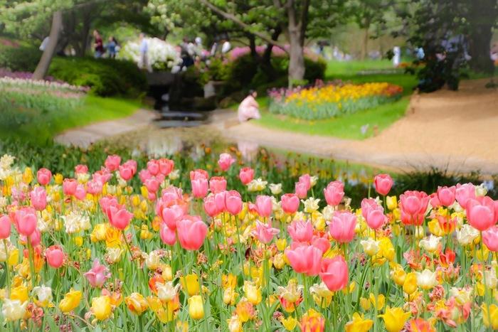 桜が見頃を終える時期になると、公園内のチューリップが競うように開花し、春爛漫とした雰囲気に包まれます。